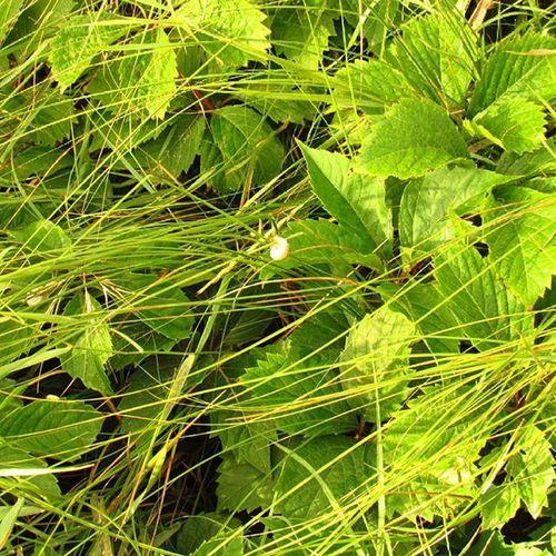 трава травушка лето Море Анапа безфильтров есличо
