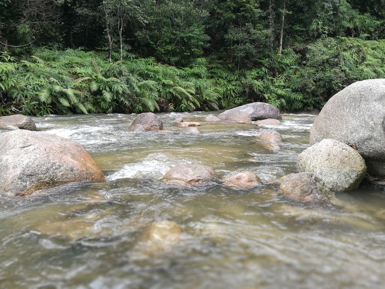 Outdoors No People Nature Day Water Beauty In Nature River Stream Malaysia Pahang Bukit Fraser Fraser Hill