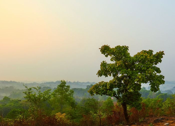 Hello World Good Morning Morning Eshwar Nagar Manipal Manipal Intitute Of Technology Forest Forest Trees Things I Like Landscapes With WhiteWall Landscape Landscape_photography Sunrise... Sunriseporn Sunrise Forest View Fresh Sunrise Colors Sunriselovers