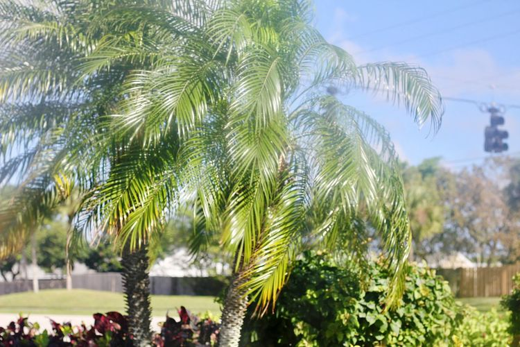 Tree Growth Nature Palm Tree Green Color Sky Outdoors Plant Beauty In Nature Close-up Day No People Branch Out The Window  Traveling Home For The Holidays Transportation Finding New Frontiers