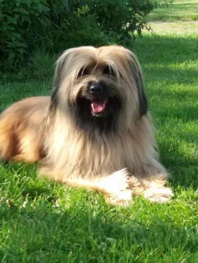 My Dog Pyrenees