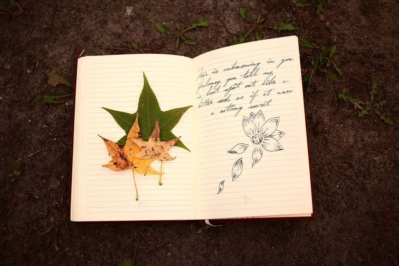 Leaf High Angle View Paper Directly Above Sketch Pad Plant No People Sketch Diary Close-up Day Indoors