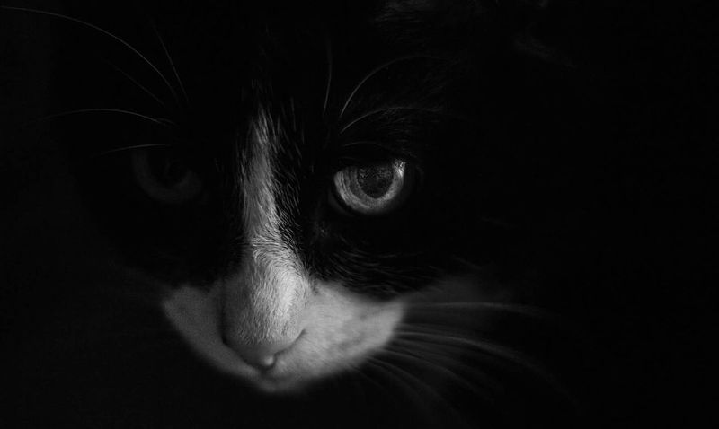 One Animal Black Background Domestic Cat No People Animal Body Part Canon700D 50mm F1.8 Canonphotography Canon Pets Close-up Animal Eye Animal Themes Domestic Animals Mammal