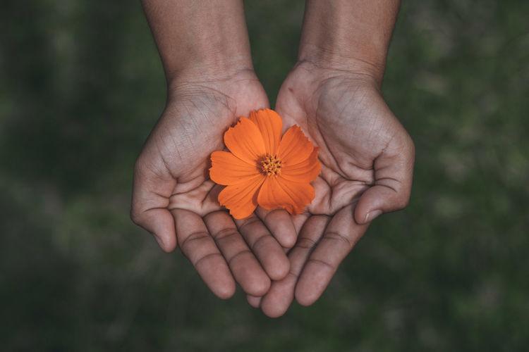 Close-up of hands holding orange flower