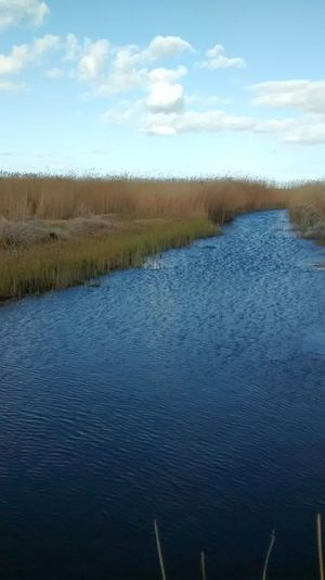Schilf und Bodenzufluss Fresh Air... Blue Water Gekräuselte Wasserfläche Schilfgürtel Beauty In Nature Cloud - Sky No People Outdoors