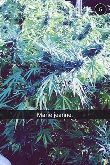 Marie_Jeanne. ??