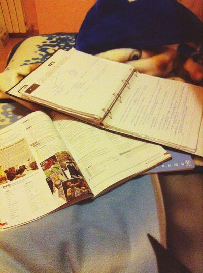 Studiando ???
