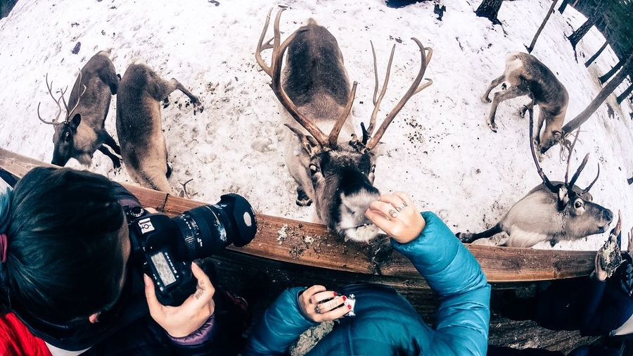 ReindeerTime here in Espoo for NBEFinland and Fotostrasse