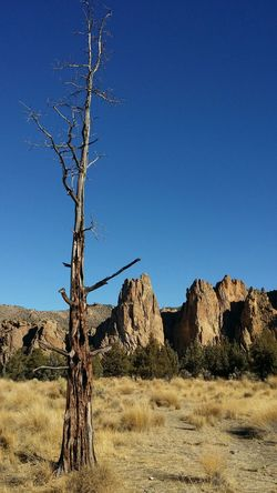 Deadtree Rock Formation Smith Rocks Oregon