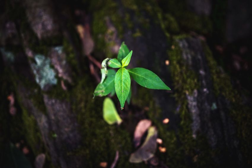 Plant Part Leaf Green Color Plant Close-up Growth Beauty In Nature Focus On Foreground No People Nature Selective Focus Day Freshness Outdoors Vulnerability  High Angle View Fragility Tranquility Land Purity