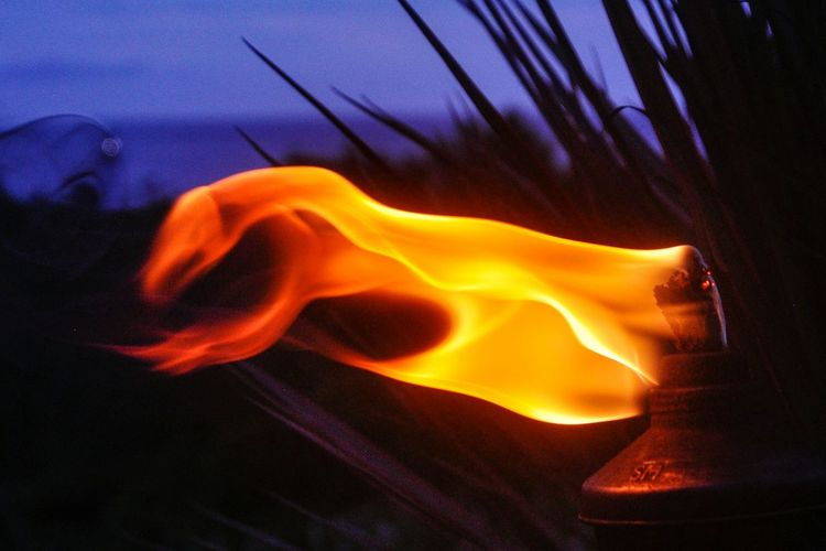 Natural Phenomenon Heat - Temperature Power In Nature Close-up Beauty In Nature Nature Rincon, Puerto Rico Torchlight Fire Dragon Shapes Dragon Like Fire Caribbean Life Taking Photos Puerto Rico Animal Shapes
