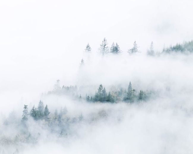 Trees in foggy weather against sky during winter