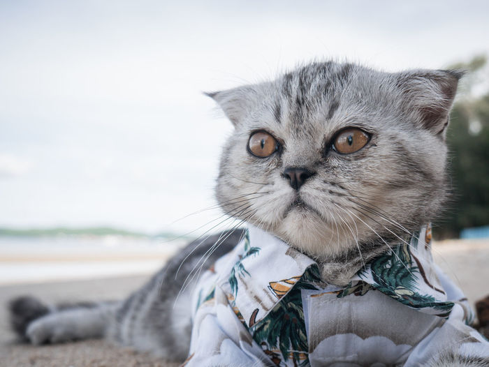 Cat relaxing on beach
