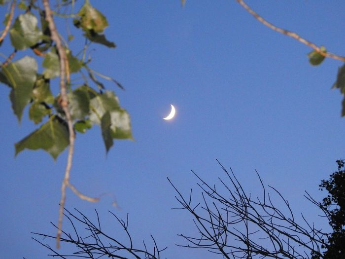 Moon Nature Branch Outdoors Low Angle View Blue Night Sky Clear Sky Scenics Tree Beauty In Nature No People Astronomy Space Moon And Sky Moonphotography Moonshot Moon_collection Moon_lovers Moon_of_the_day Moon Porn Moon Crescent