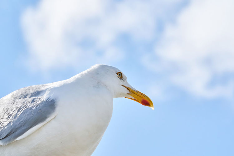 A head of a seagull sits against the blue sky in the sun.