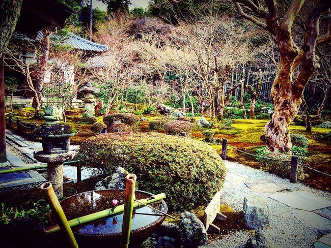 圜光寺 一乗寺 京都 Kyoto 寺社仏閣 庭園 Relaxing