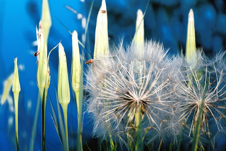 deep soul Vision Naturelovers Peace Backgrounds Non-urban Scene No People Flower Flower Head Close-up Plant Grass Wildflower In Bloom Plant Life