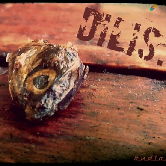 Dilis Deadhead
