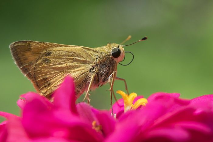 Insect Flower Animals In The Wild Leaf Nature Beauty In Nature Outdoors