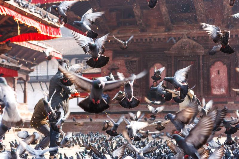 Birds Flying In City