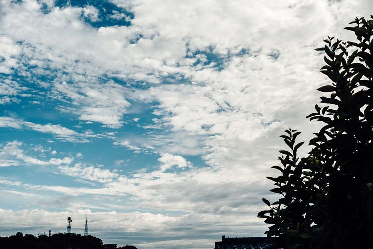 The Clouds Clouds And Sky Summer Views Morning Sky No People Cloudscape City Sky And Clouds Beauty In Nature Tree Shillouette Low Angle View Cloud - Sky Sky Summer Sky And Clouds Everyday Life Yokohama Sky Yokohama July July 2017