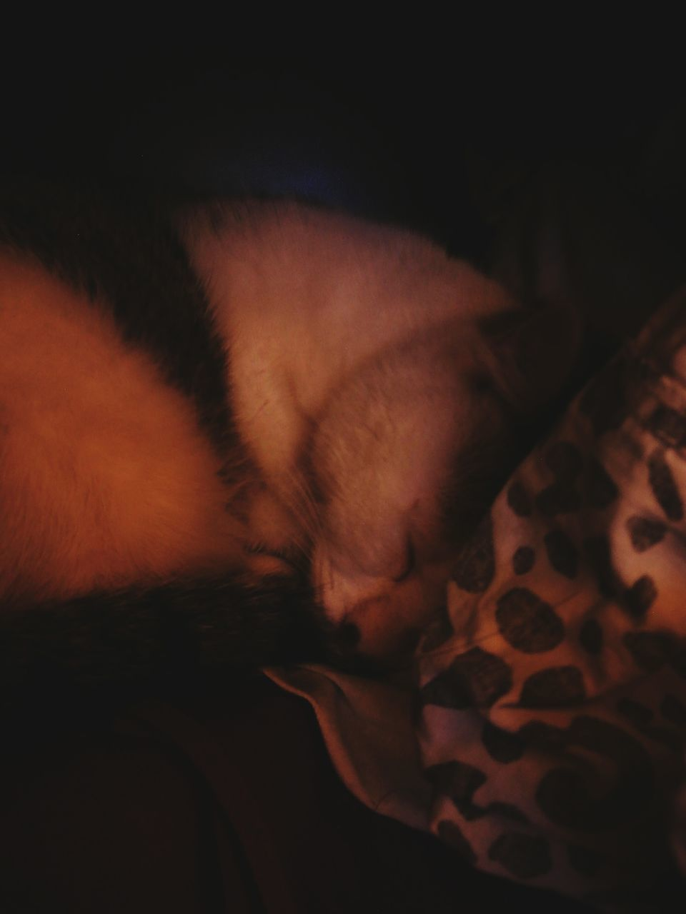 one animal, pets, animal themes, mammal, domestic animals, indoors, domestic cat, sleeping, relaxation, lying down, feline, no people, bed, close-up, night, nature