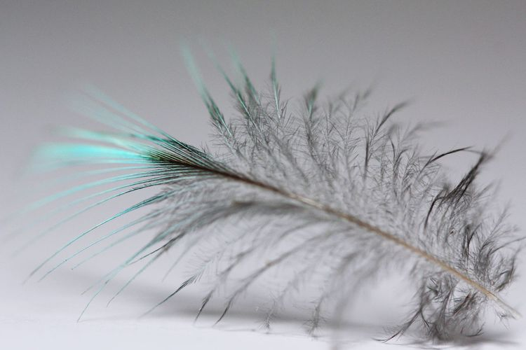 Feather Feather