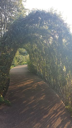 Walking through the decorative Hedge
