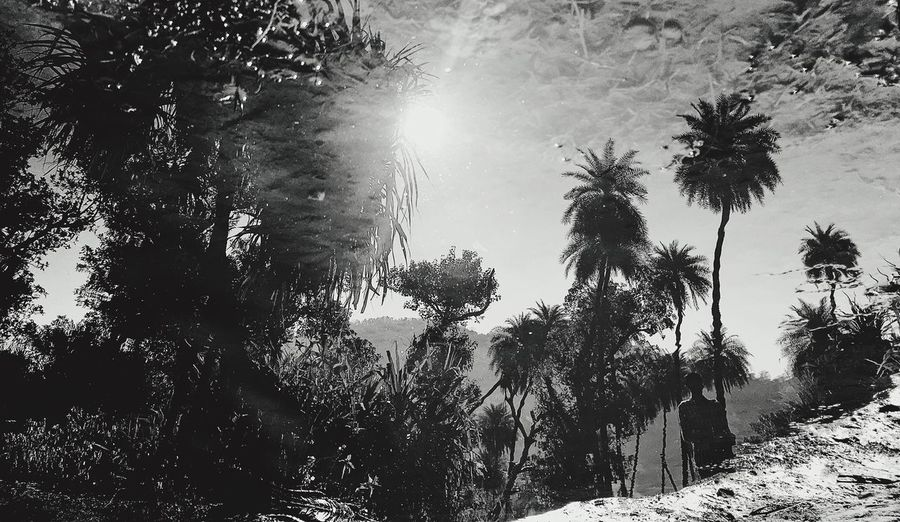 Tree Palm Tree Sunlight Sunbeam Sun Nature Tranquility Outdoors Tranquil Scene Beauty In Nature Growth Day Scenics Tree Trunk Low Angle View Sky Reflection Reflections In The Water Creativity Blackandwhite The Great Outdoors - 2017 EyeEm Awards Live For The Story