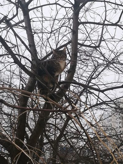 Bird Tree Branch Perching Bare Tree Sky