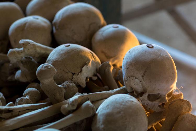 Bones Close-up Day Human Bone Human Skeleton Human Skull Indoors  Skull