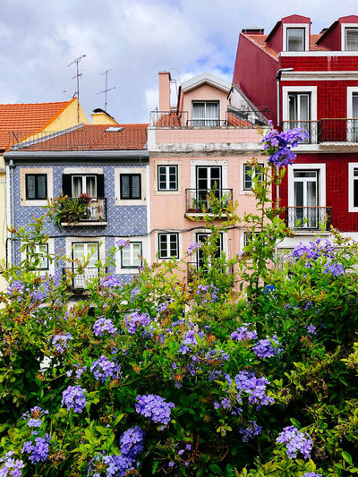 View of flowering plants and buildings against sky
