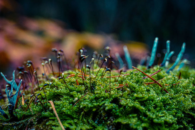 Close-up of plants growing on the forrest floor