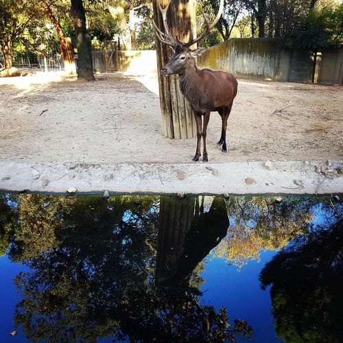 Deer on tree by water