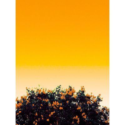 And it was all yellow Summer Houston Houstontexas Hotshots Candyminimal Minimal Minimalistic Mindtheminimal Austin ATx Htx Dtx  Goexplore Texas Peace Gradientnation Happiness Bestofig Flowers Rsa_minimal Igofhouston