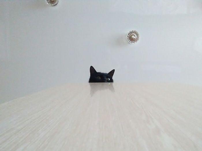 Hi! Cat♡ Black Cat Is Just So Beautiful. Cat Pet Portraits