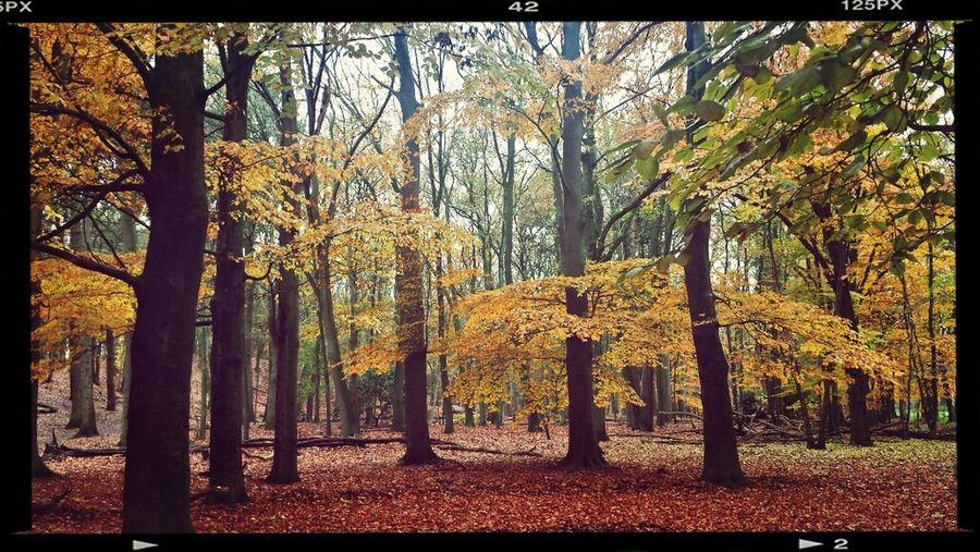 Autumn November day..!!.. Taking Photos Autumn Autumn Colors Enjoying Life
