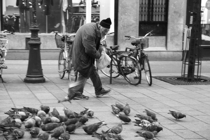 City City Life Lifestyles Occupation Old Man Paris Paris, France  Pidgeons Street