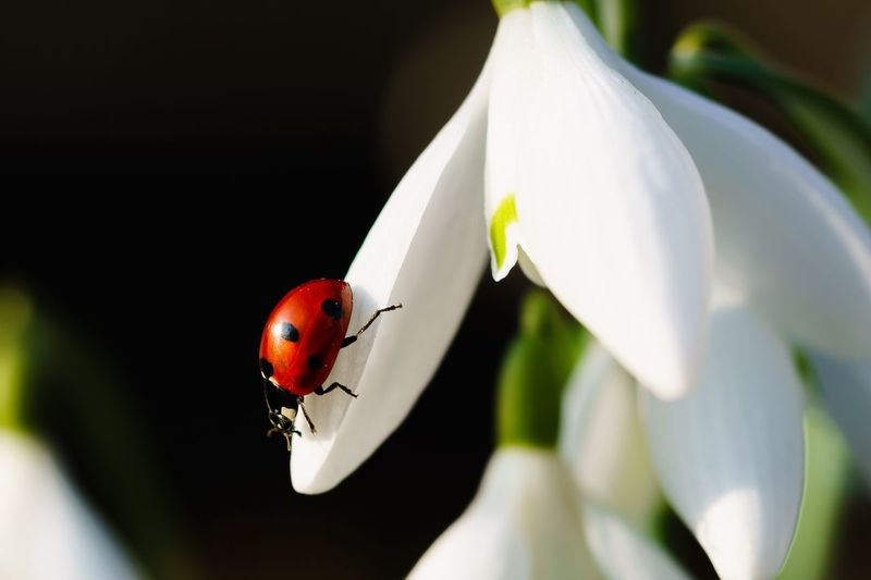 Close-up of ladybug