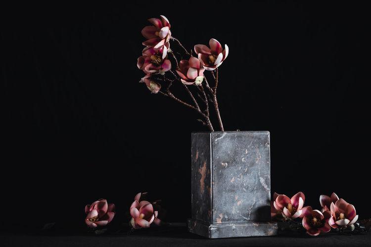 Close-up of pink roses in vase against black background