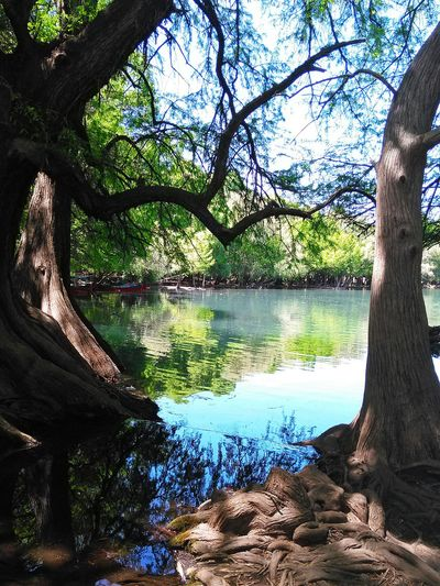 The Trees and Lake in my trip to Camecuaro Michoacan México. Beautiful Weather♡