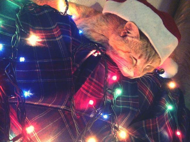 Happy New Year Scotland Cat 2015 Pets Corner