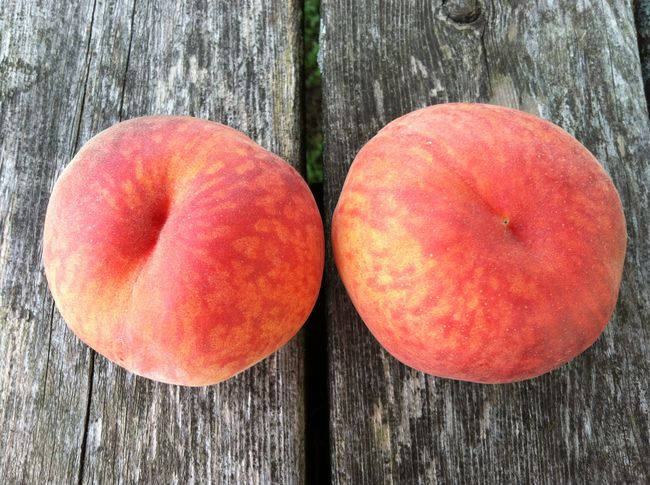 Close-up Couple Focus On Foreground Food Freshness Nature No People Organic Pair Pairs Peach Peaches Peachy Ripe Still Life Two Wood Wood - Material Wooden ShareTheMeal