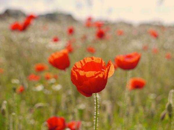 One in a million. Flower Depth Of Field Summer Beauty