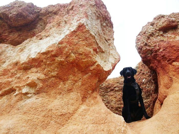 My baby boy, Ace. I Love My Dog Adventure Time climbing Rocks with My Dog Doglover Cute Pets Dog SundayFunday Love Dogs Dog Love