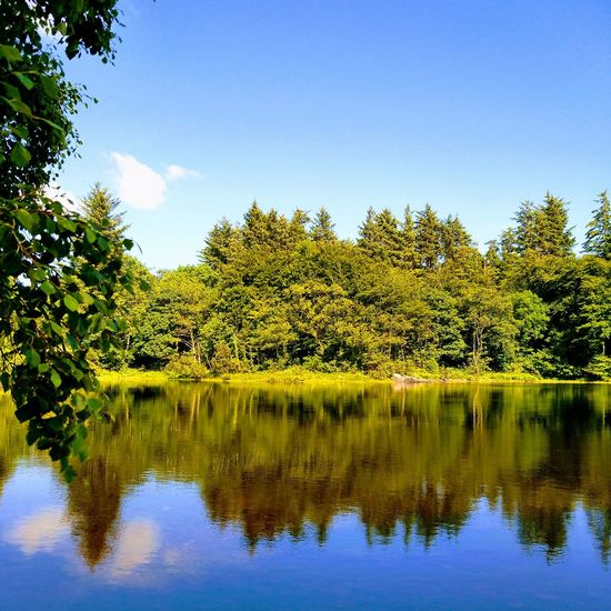 Lake shadows Reflection Water Sky Tree Lake Nature Beauty In Nature Outdoors Blue Day No People Freshness wild