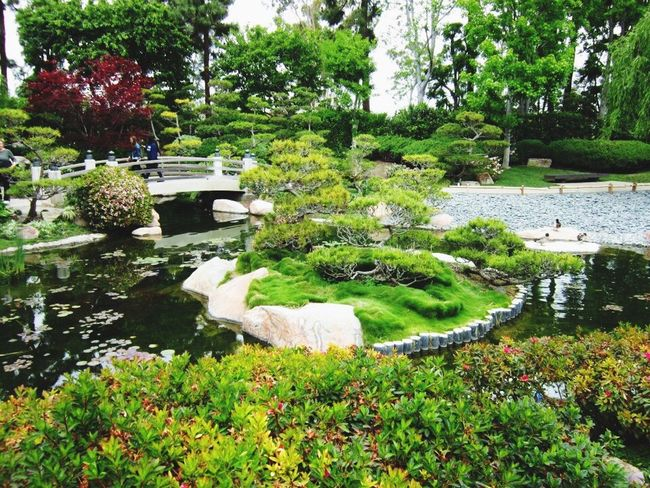 Tree Growth Nature Plant Green Color Beauty In Nature Water Day Outdoors Flower No People Grass Garden Animal Themes Swan Sky Japanese Garden