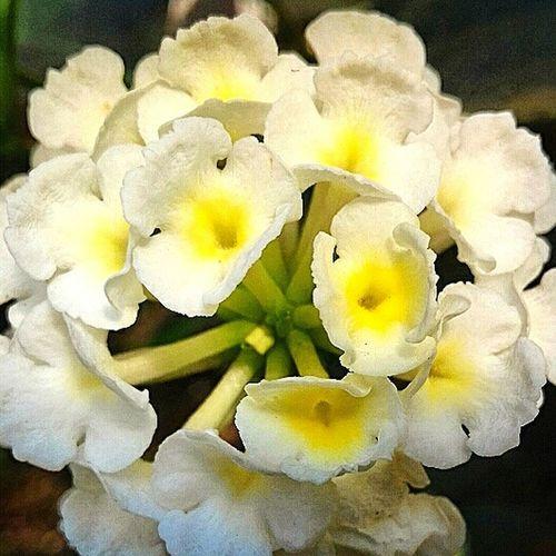 Flores Y Más Flores Flores Y Texturas Naturaleza En La Ciudad Jilroa Samsung