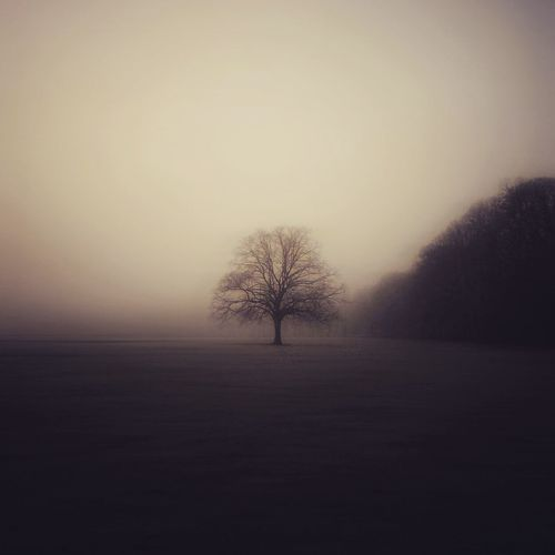 Mist Tree Nature Naturelovers Nature_collection Nature Photography Trees Fog Beautiful Tree Photography