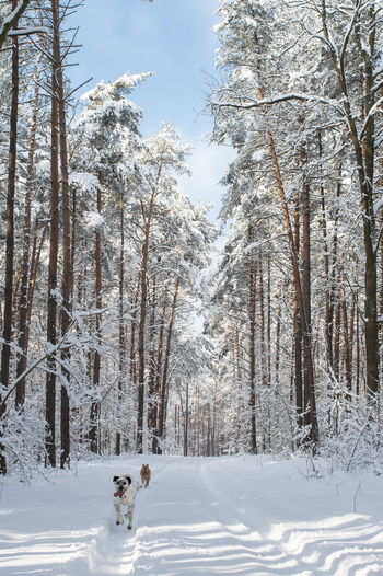 Animals Branches Of Trees Cold Temperature Day Dog Dogs In The Forest Dogs Running  Forest Way Freeze Nature No People Outdoors Poland Nature Sky Snow Snow Covered Snow On Trees Snowy Days... Snowy Road Snowy Scene Snowy Trees Tree Trees In The Snow Winter Winter Trees